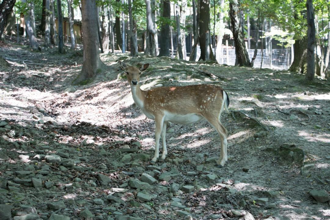 Лесной парк в г. Устронь