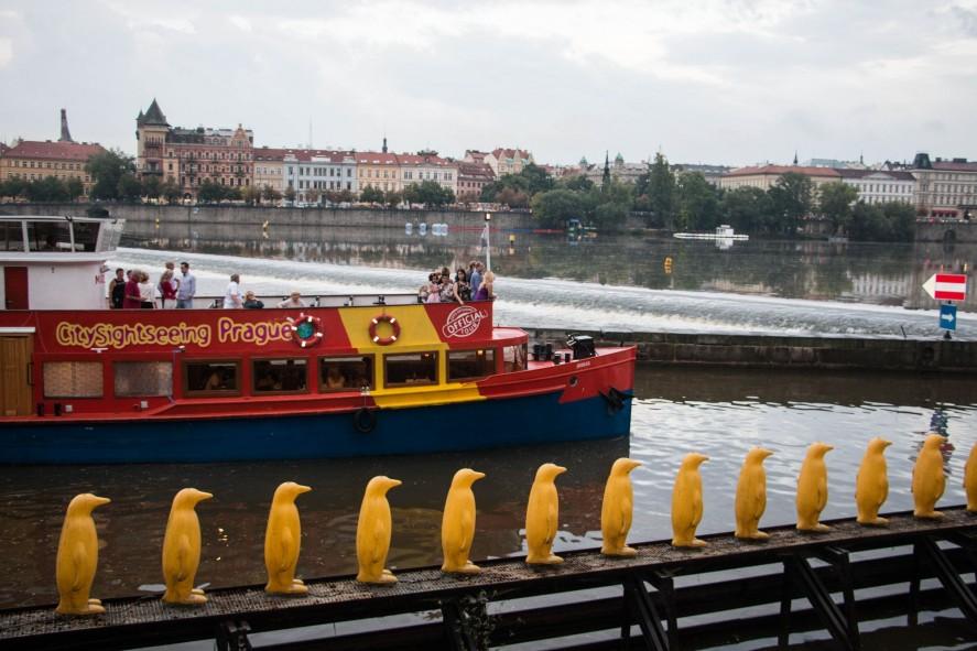 Марш пингвинов через реку Влтаву